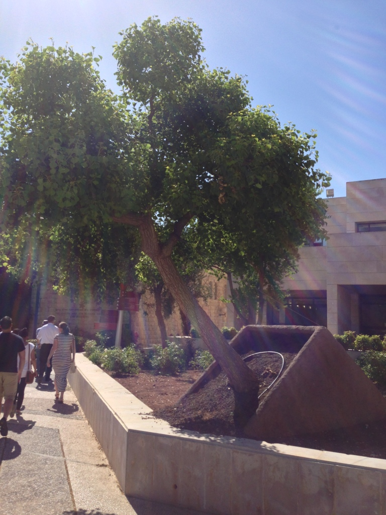 Memorial to the victims of the 2002 Hebrew University bombing. This tree was shaken by the impact of the blast, but it is still firmly rooted in its place.